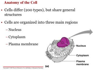 Anatomy of the Cell