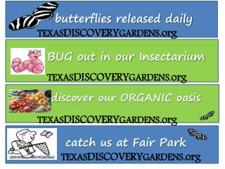 butterflies released daily