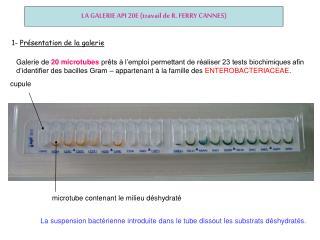 LA GALERIE API 20E travail de R. FERRY CANNES
