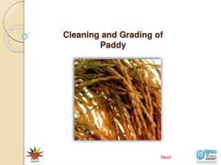 Cleaning and Grading of Paddy