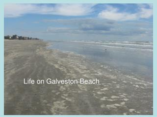 Life on Galveston Beach