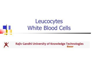 Leucocytes White Blood Cells