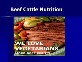 Beef Cattle Nutrition