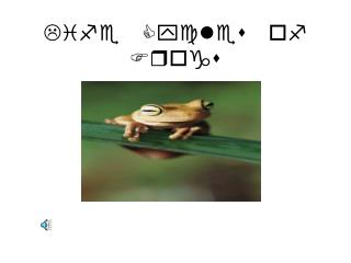 Life Cycles of Frogs