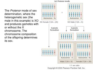 Klinefelter Syndrome and Turner Syndrome Karyotypes