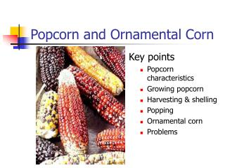 Popcorn and Ornamental Corn