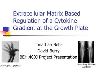 Extracellular Matrix Based Regulation of a Cytokine Gradient at the Growth Plate