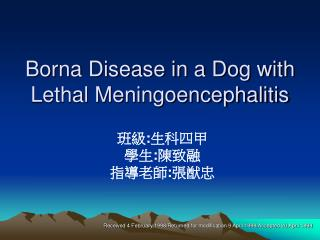 Borna Disease in a Dog with Lethal Meningoencephalitis