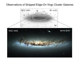 Observations of Stripped Edge-On Virgo Cluster Galaxies