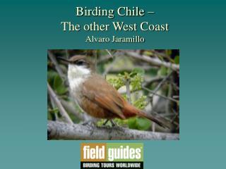 Birding Chile    The other West Coast  Alvaro Jaramillo