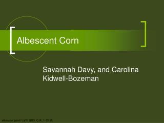 Albescent Corn