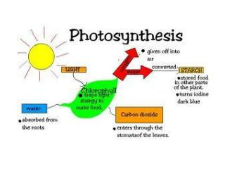 LO's Explain why photosynthesis is so important to energy and material flow for life on earth