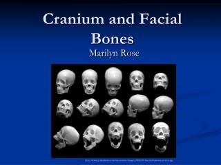 Cranium and Facial Bones