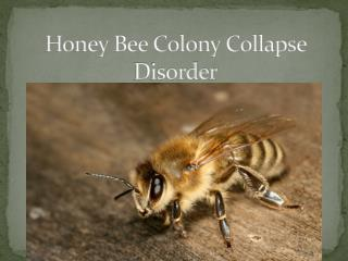 Honey Bee Colony Collapse Disorder