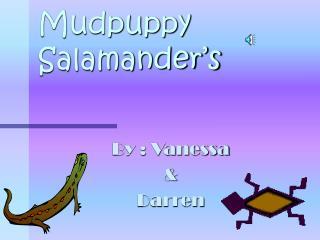 Mudpuppy Salamander's