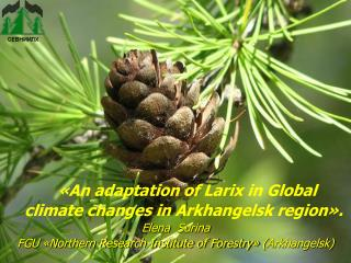 «An adaptation of Larix in Global climate changes in Arkhangelsk region».