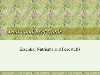 Dairy and Beef Cattle