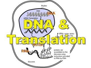 DNA & Translation