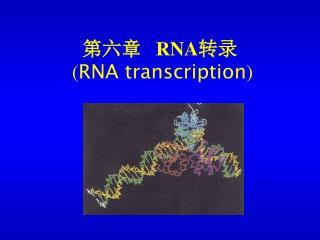 ???    RNA ?? ( RNA transcription )