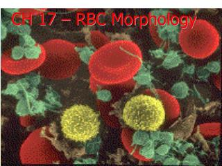 CH 17 – RBC Morphology