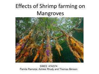 Effects of Shrimp farming on Mangroves