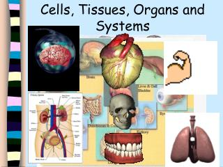 Cells, Tissues, Organs and Systems