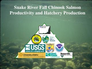 Snake River Fall Chinook Salmon Productivity and Hatchery Production