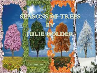 SEASONS OF TREES BY  JULIE HOLDER
