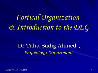 Cortical Organization  & Introduction to the EEG