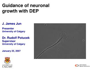 Guidance of neuronal growth with DEP