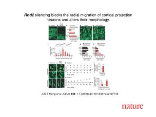 JLK-T Heng  et al. Nature 000 , 1-5 (2008) doi:10.1038/nature07198