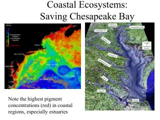 Coastal Ecosystems: Saving Chesapeake Bay