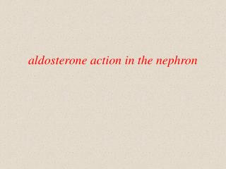 aldosterone action in the nephron