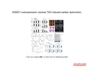 C Kho  et al .  Nature 000 ,  1 - 5  (2011) doi:10.1038/nature10407