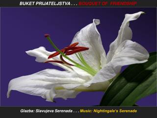 Glazba : Slavujeva Serenada . . .  Music: Nightingale's Serenade