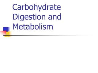 Carbohydrate  Digestion and Metabolism