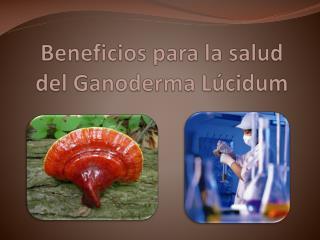 Beneficios para la salud del Ganoderma L cidum