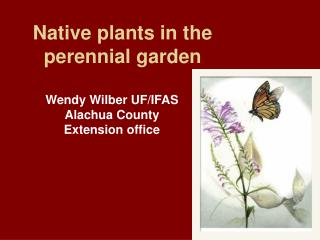 Native plants in the perennial garden
