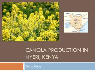 Canola production in  nyeri ,  kenya