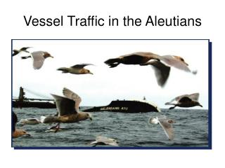 Vessel Traffic in the Aleutians