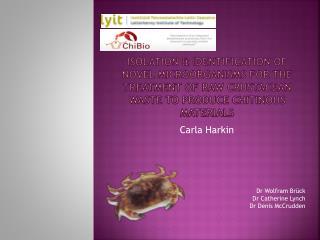 Carla Harkin