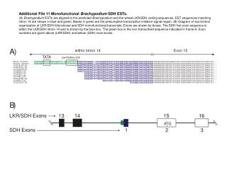 Additional File 11 Monofunctional  Brachypodium  SDH ESTs.