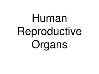 Human Reproductive Organs