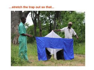 …stretch the trap out so that...