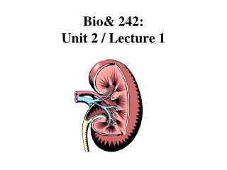 Bio& 242:  Unit 2 / Lecture 1