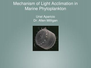 Mechanism of Light Acclimation in Marine Phytoplankton