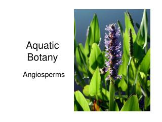 Aquatic Botany