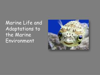 Marine Life and Adaptations to the Marine Environment