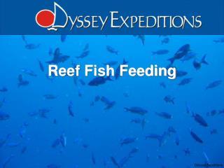 Reef Fish Feeding