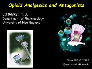 Opioid Analgesics and Antagonists